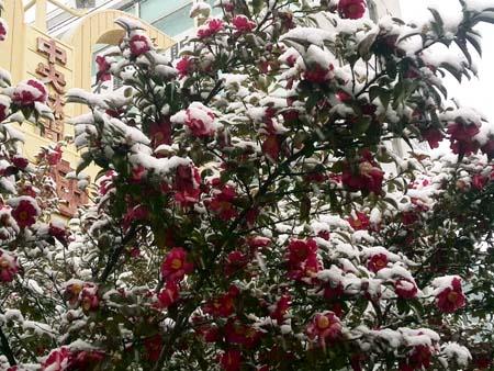 雪の受験日